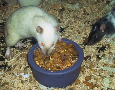 Best Dog Food for Rats