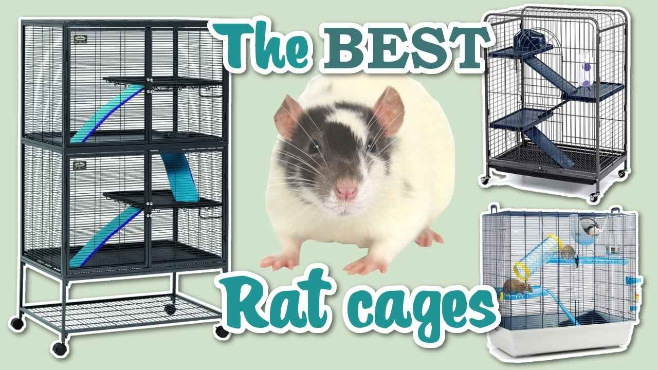 Best Rat Cages for 2 Rats
