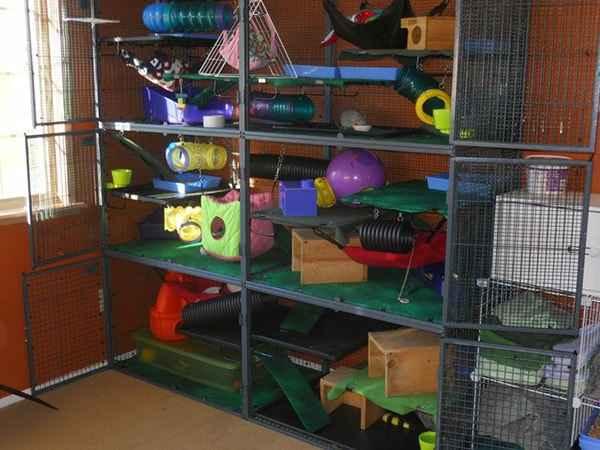 Best Rat Cages for 4 Rats