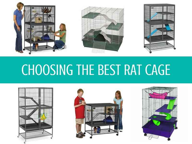 Best Rat Cages for the money