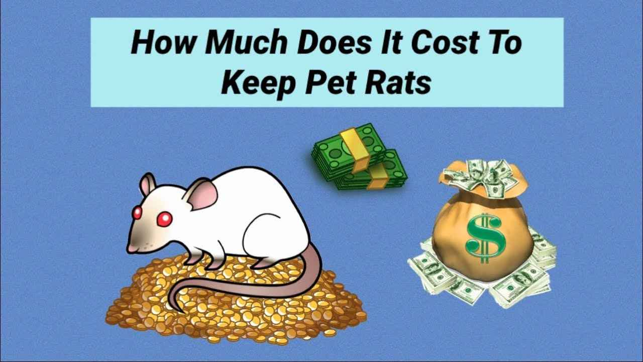 Costs of Owning a Rat