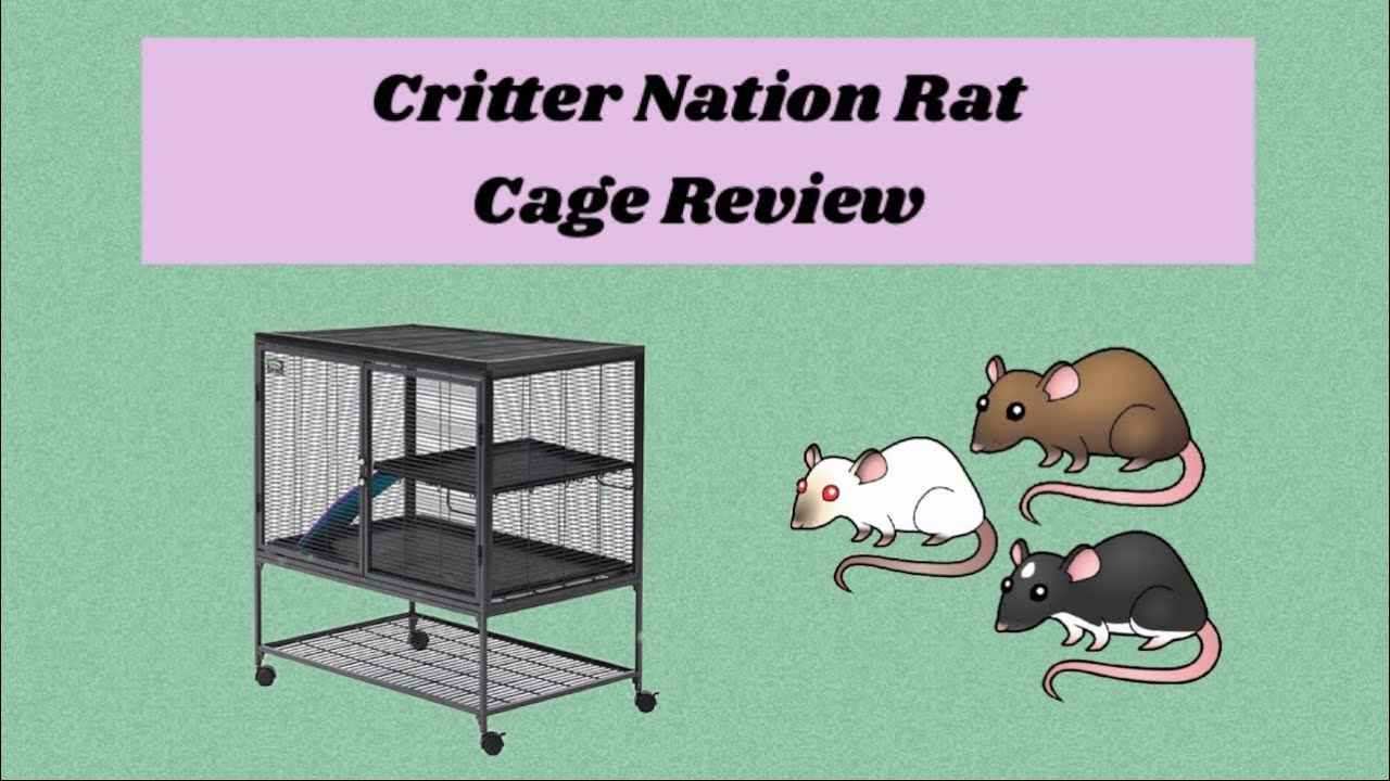 Critter Nation Rat Cage Review