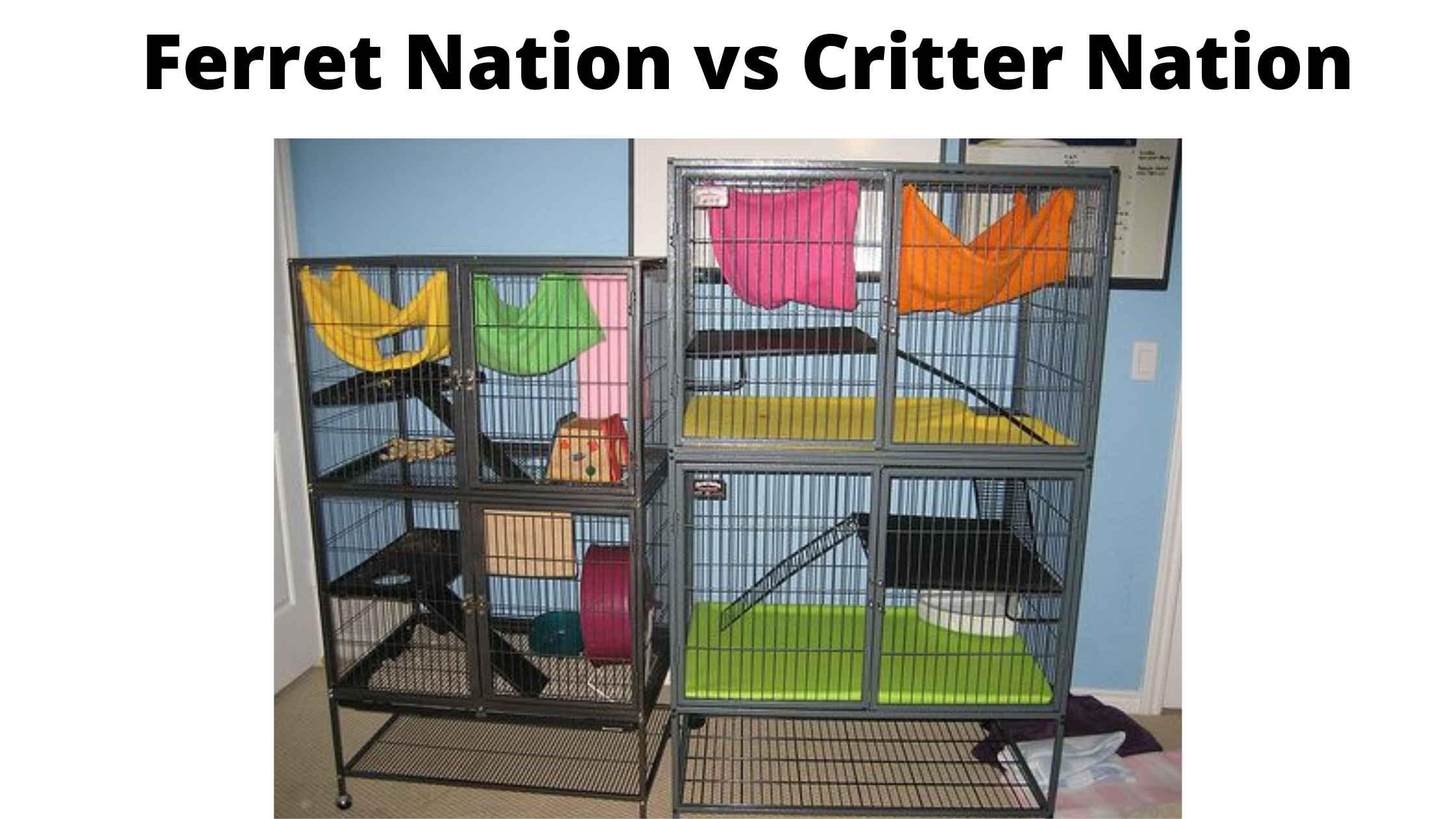 ferret nation vs critter nation for chinchilla