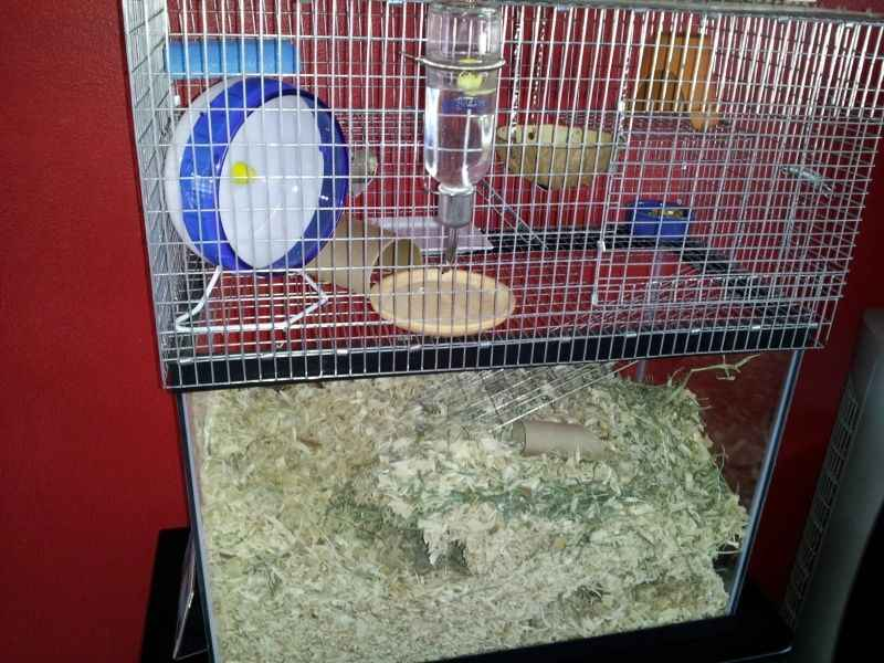 Rat Aquarium vs Cages