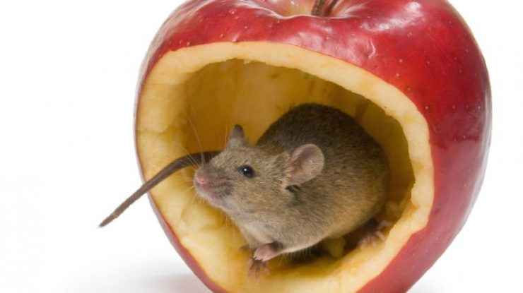 Unsafe Foods for Rats to Eat
